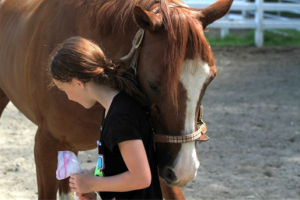 equine-assisted-psychotherapy